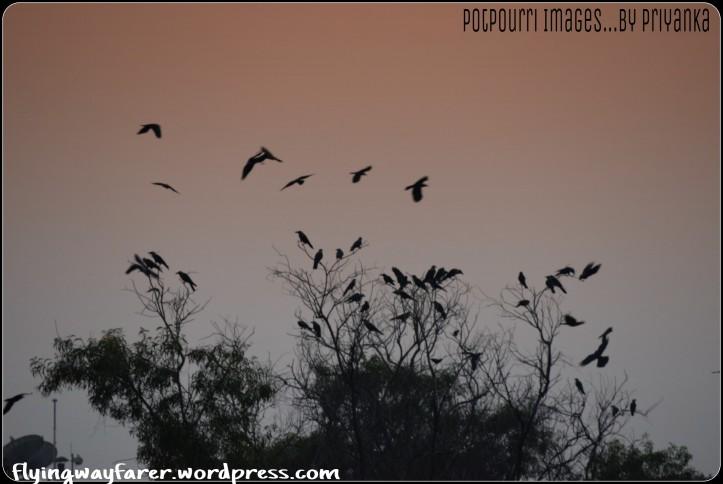 PicsArt_12-12-09.35.05