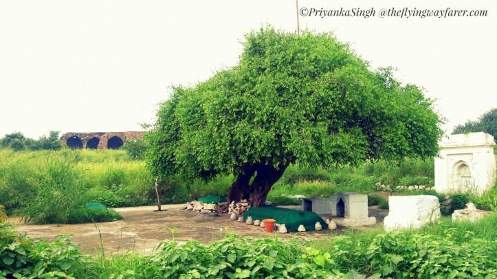 Heritage Walk_Bijay mandal Begumpur9