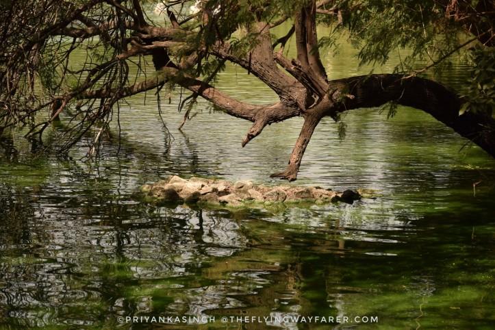 Delhi National Zoological Park