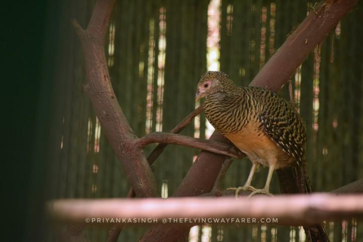 Delhi National Zoological Park11