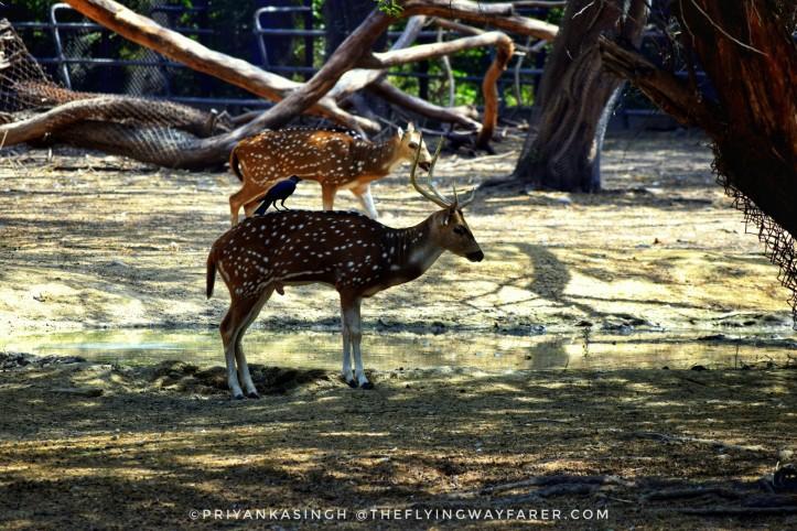 Delhi National Zoological Park13