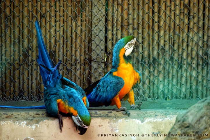 Delhi National Zoological Park16