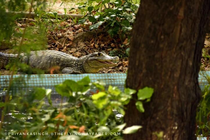 Delhi National Zoological Park17