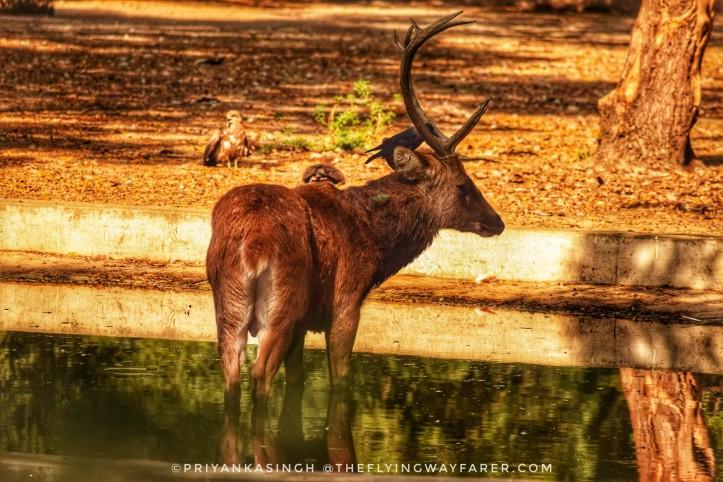 Delhi National Zoological Park18