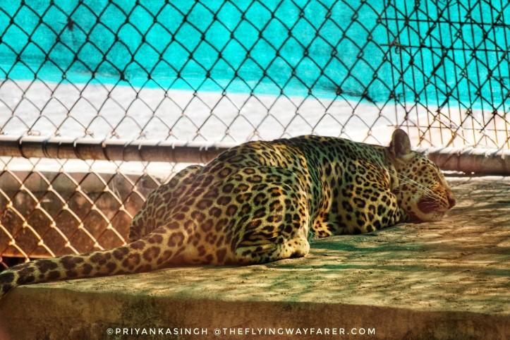 Delhi National Zoological Park19