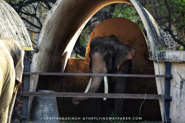 Delhi National Zoological Park2
