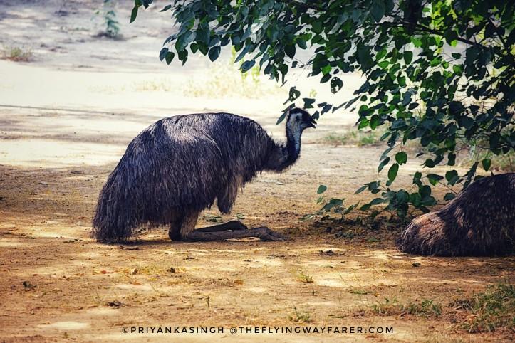 Delhi National Zoological Park4