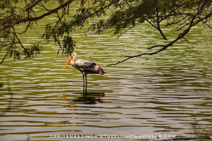 Delhi National Zoological Park7