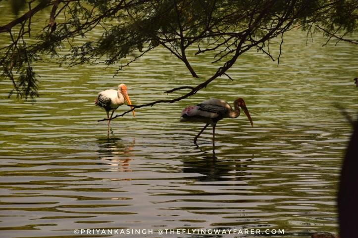 Delhi National Zoological Park8