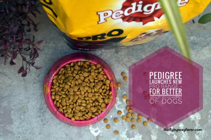 Pedigree Pro13